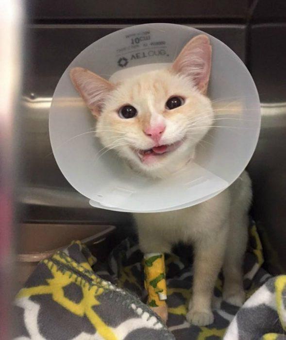 una gatita con sonrisa torcida