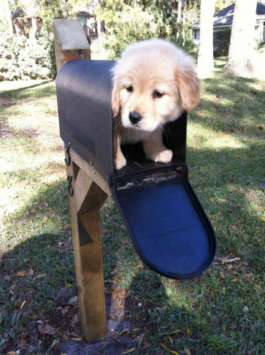cachorro en el buzón