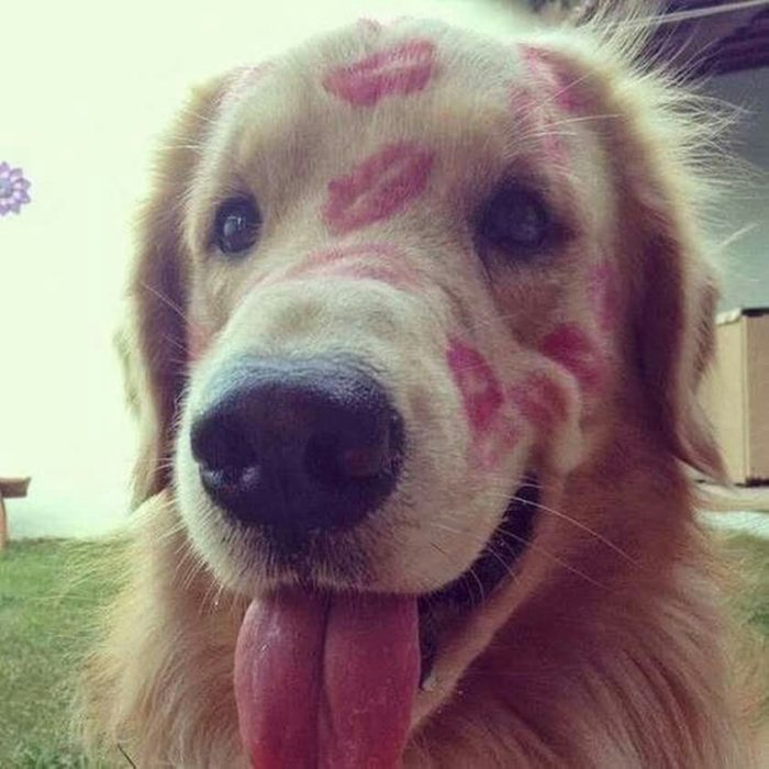 perro lleno de besos