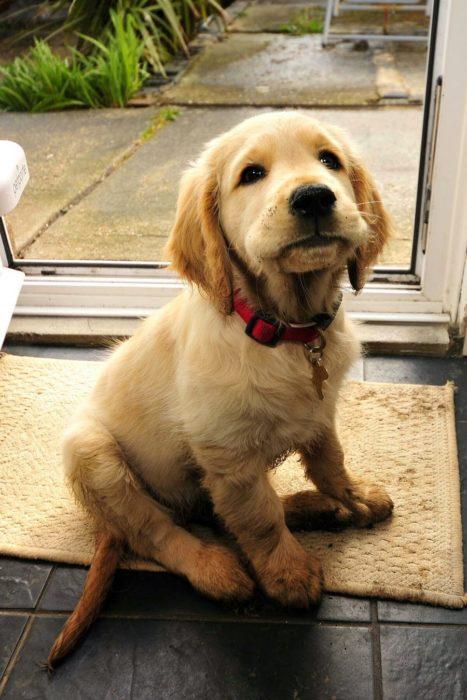 cachorro que acaba de jugar en el lodo