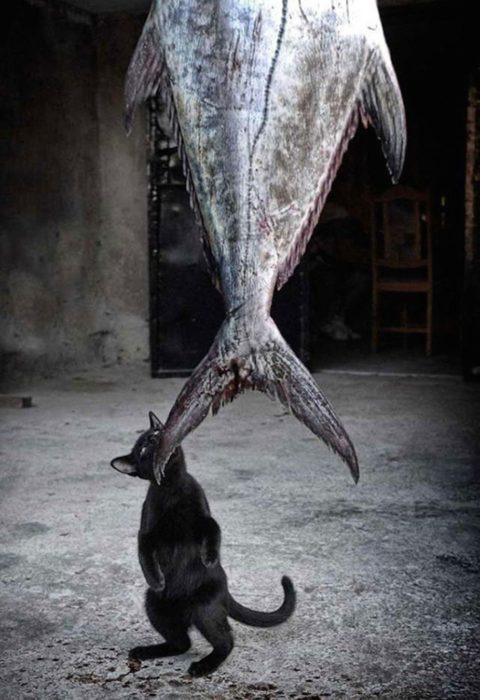 gato pequeño muerde un gran pescado