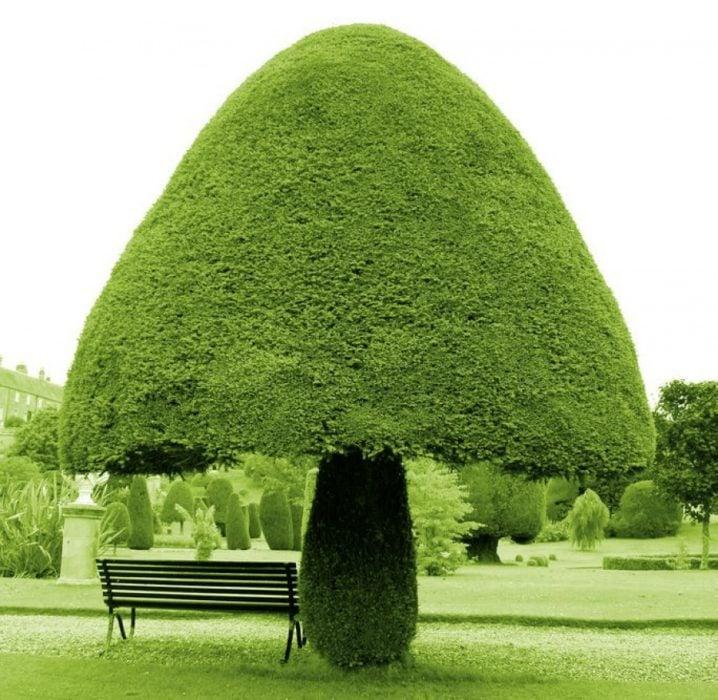 Árbol con forma de hongo