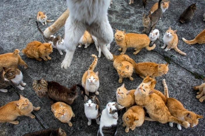 isla de los gatos en Japón