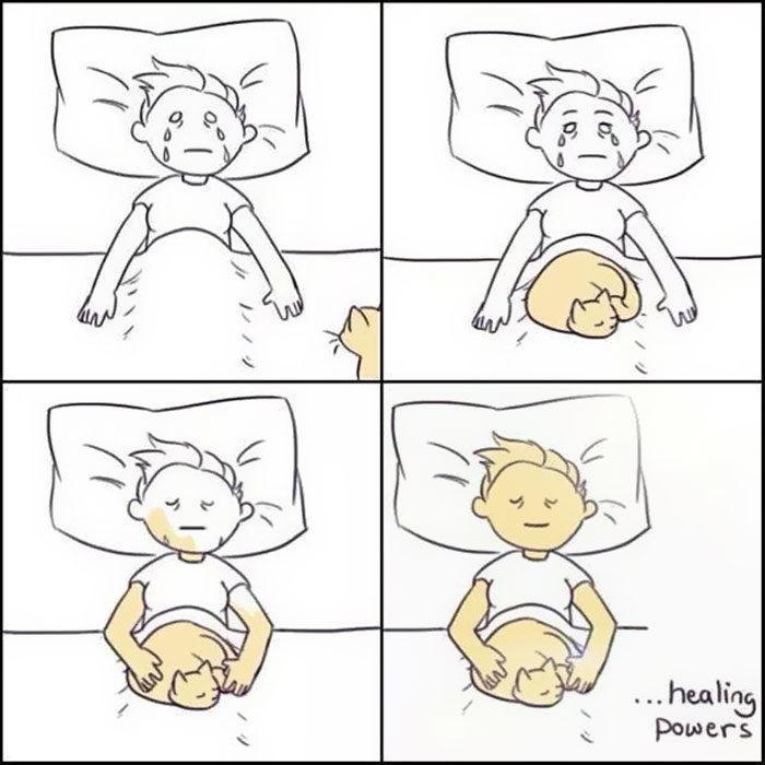 la vida real con gatos 20