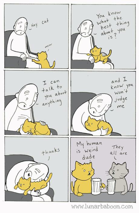 la vida real con gatos 7