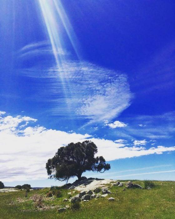 árbol en cielo azul