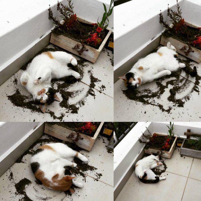 gato haciendo un ángel de tierra