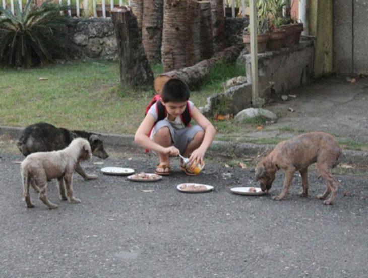 niño alimentando a perros de la calle
