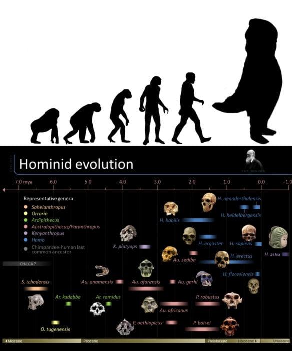 Evolución dinosaurio niño disfraz