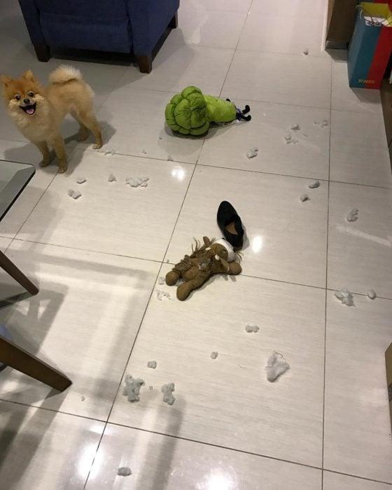 perro hace un desastre en su casa