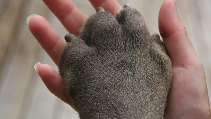 la pata de un perro con la mano de un humano