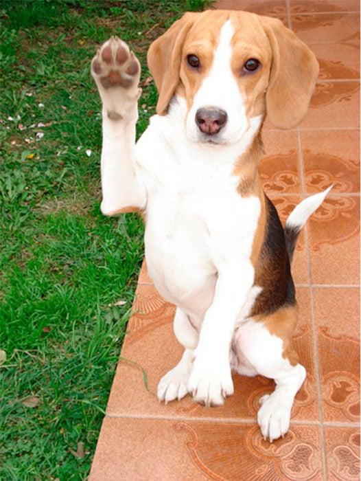 un perro mostrando su pata