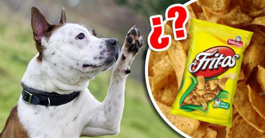 Cover patas de los perros huelen a fritos