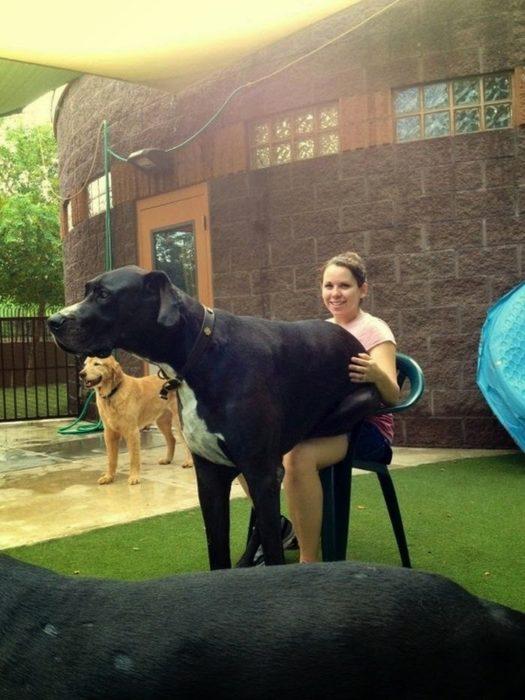 perro gigante sentado en las piernas de su dueña