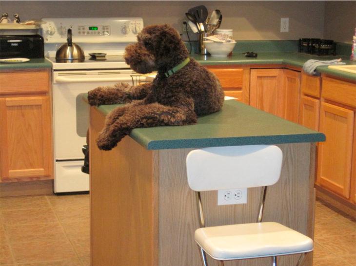 perro gigante aocstado en la mesa