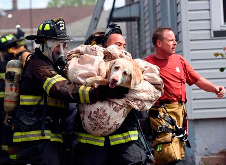 bomberos rescataron a un perro lesionado en un incendio