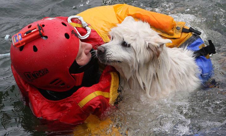 un perro siendo resctado por un bombero en una inundación