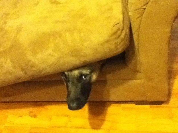perros juegan escondidas asiento perruno 13