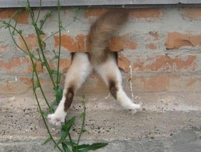 perros juegan escondidas emparedado 19