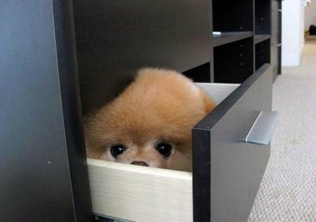 perros juegan escondidas en gaveta 11