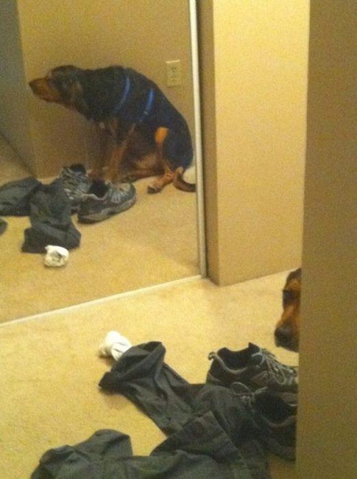 perros juegan escondidas esquina fallida 8