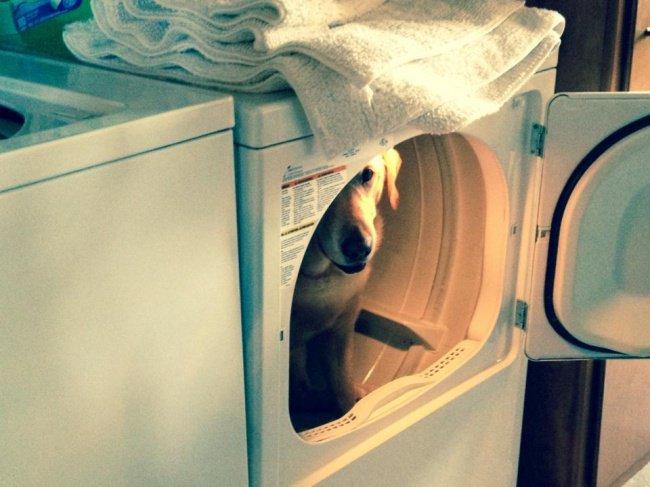 perros juegan escondidas lavadora 2
