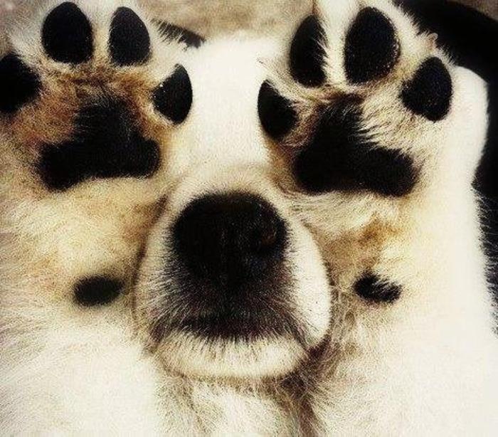 perros juegan escondidas on ta 15
