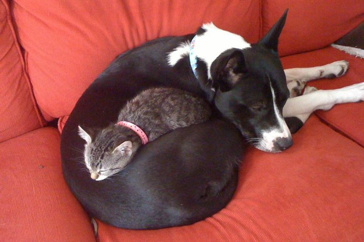 Perros que son camas