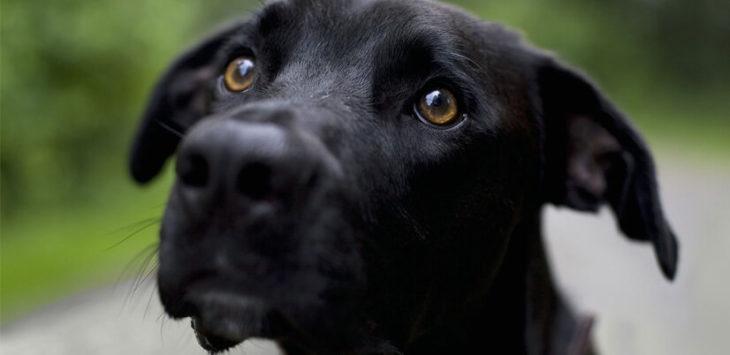 un perro con mirada de amor