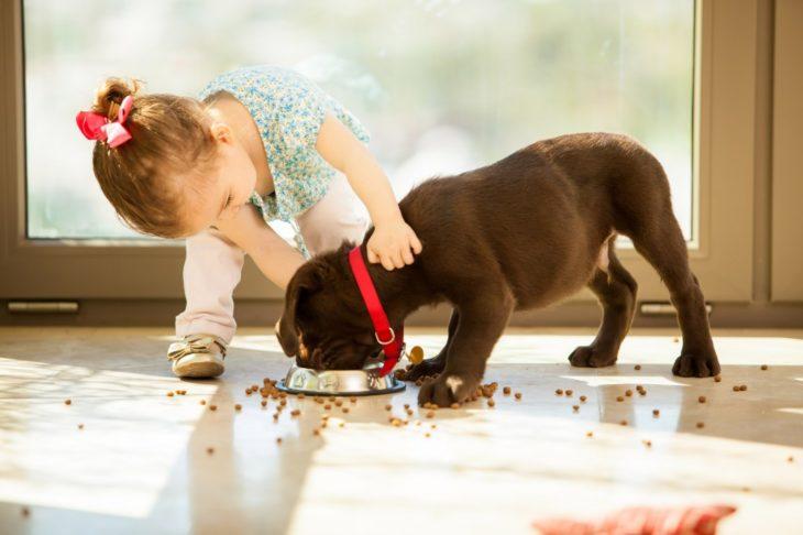 perro comiendo mientras una bebé lo abraza