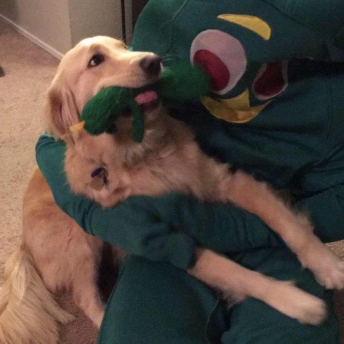 un perro con su juguete favorito