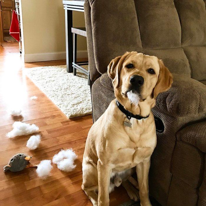 perro con esponja de almohada en el hocico