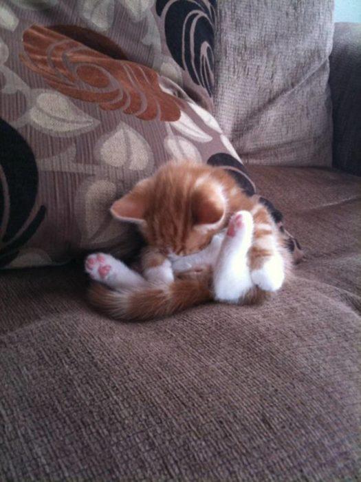 gatito dormido como contorsionista