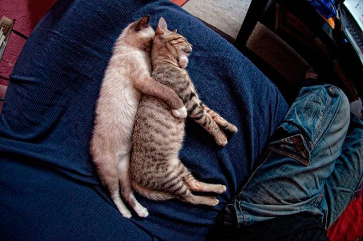 gatos dormidos juntos