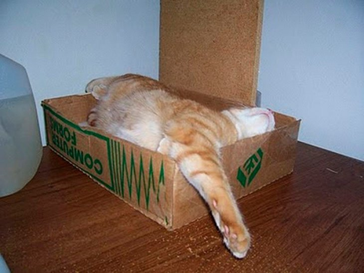 gato dormido en una caja donde no cabe