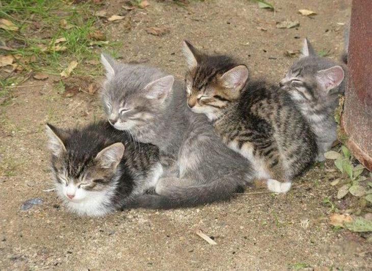 gatos dormidos uno encima del otro