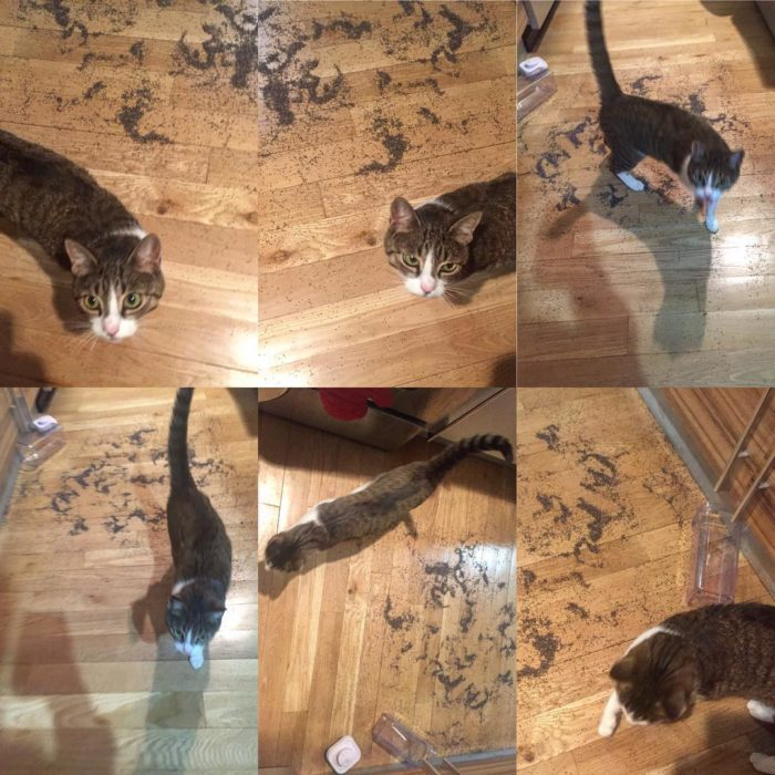 gato lleno de tierra el piso de una casa