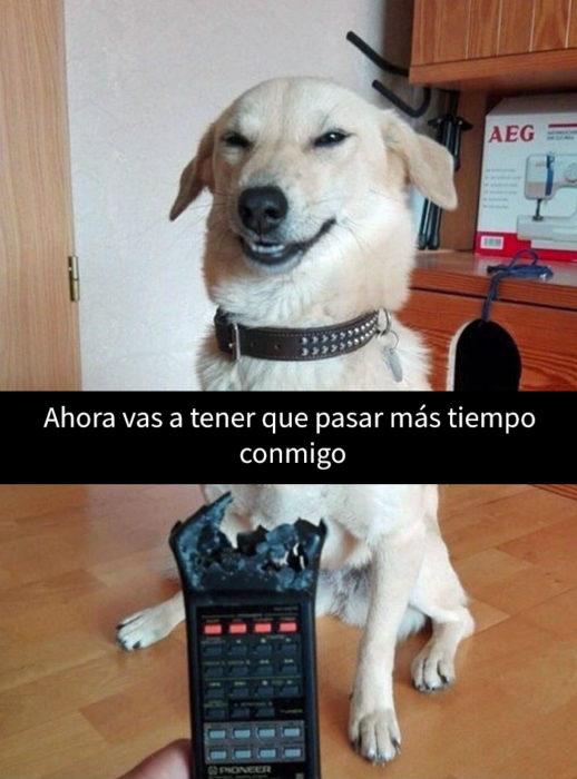 un perro feliz de haber mordido el control remoto de su amo humano