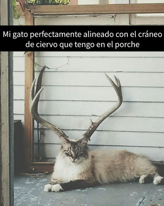 foto en snapchat de un gato debajo de unos cuernos