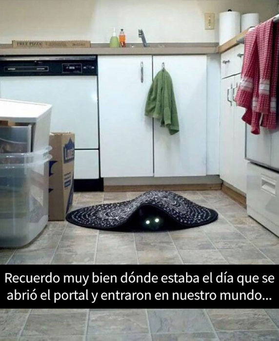 un gato debajo de un tapete
