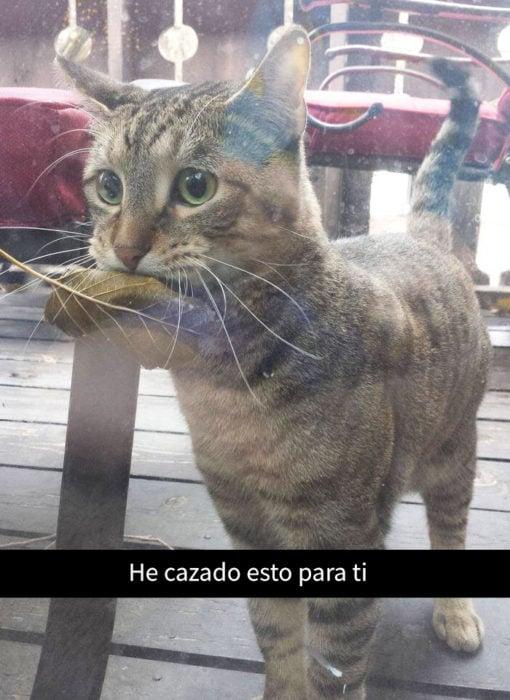 snapchat sobre un gato