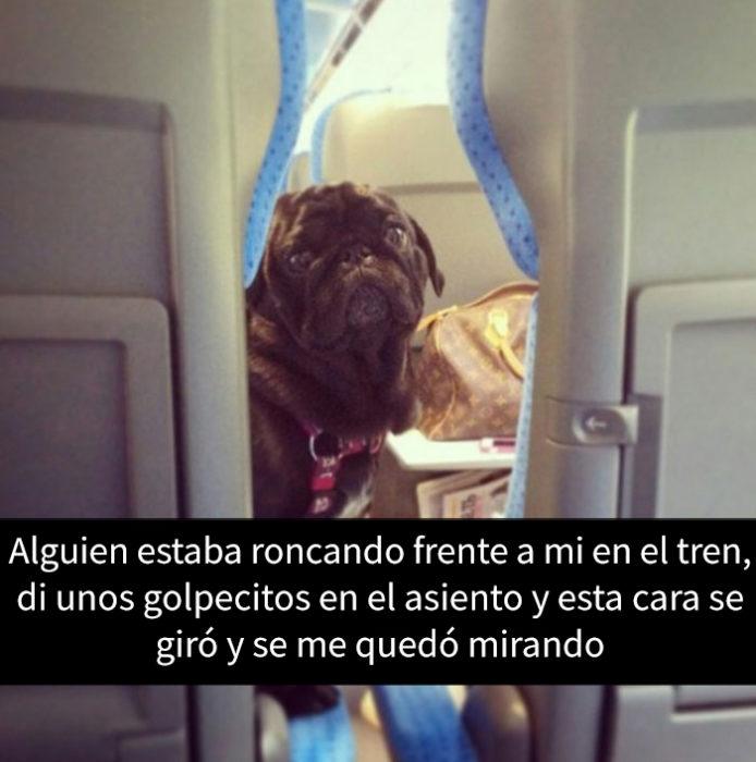 snapchat de un perro viajando en avión