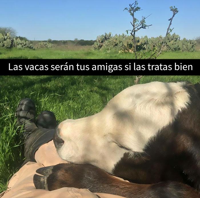 una vaca con su humano que es su mejor amigo