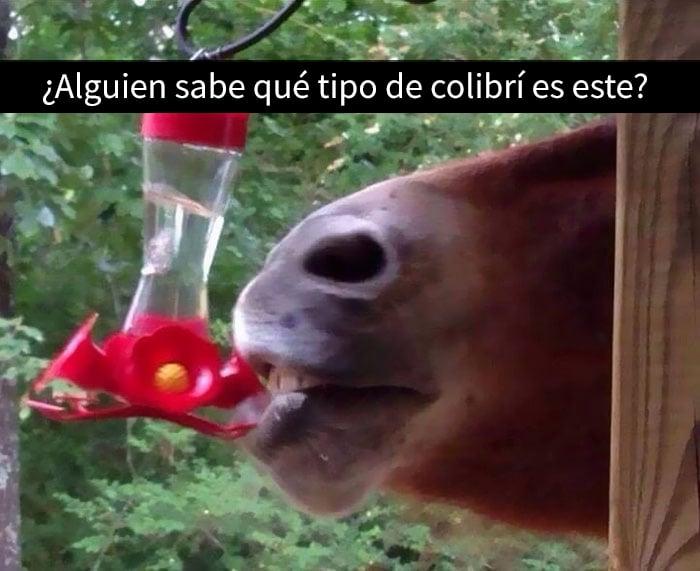 una caballo bebiendo agua