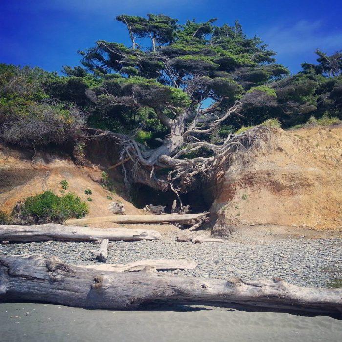 árbol con las raíces de fuera