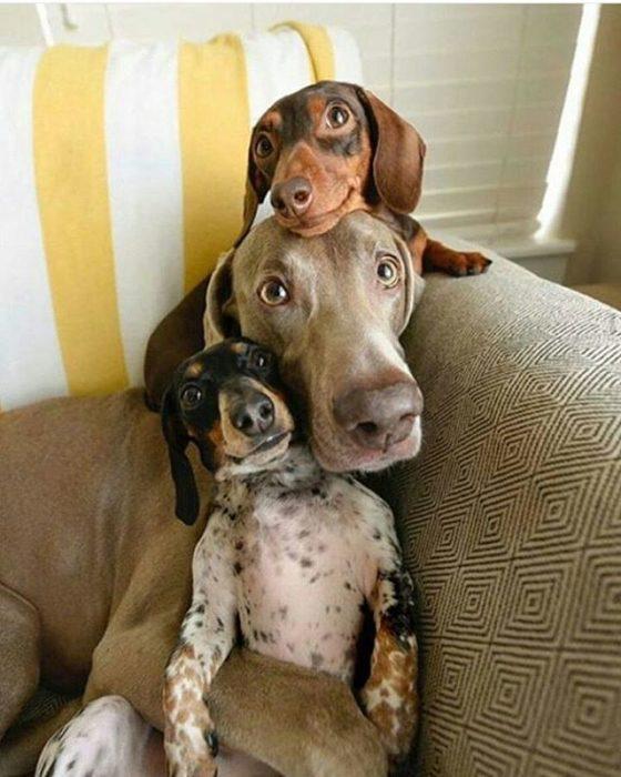 foto de tres perros
