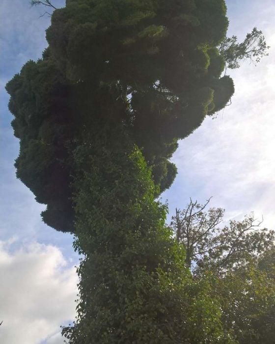 Árbol enredado