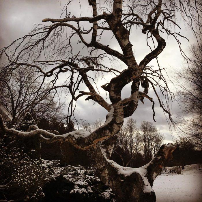 ramas de árbol viejo
