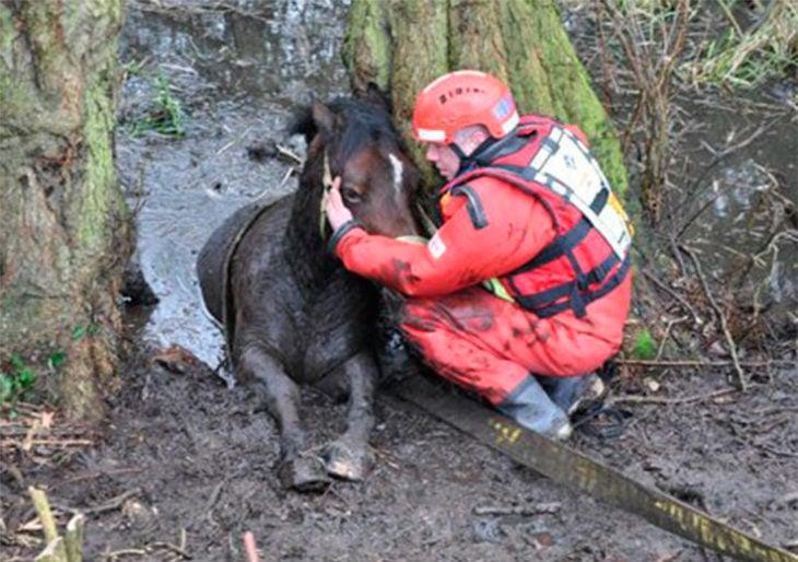 bomberos rescatando a una yegua atrapada