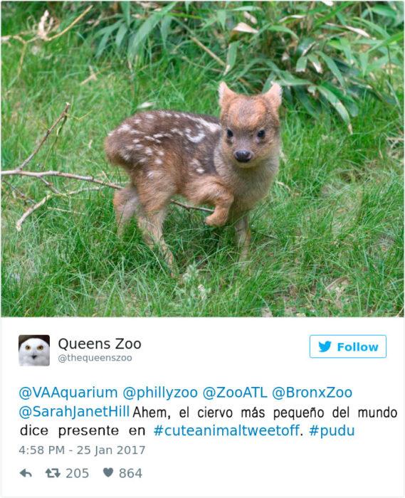 el ciervo más pequeño del mundo